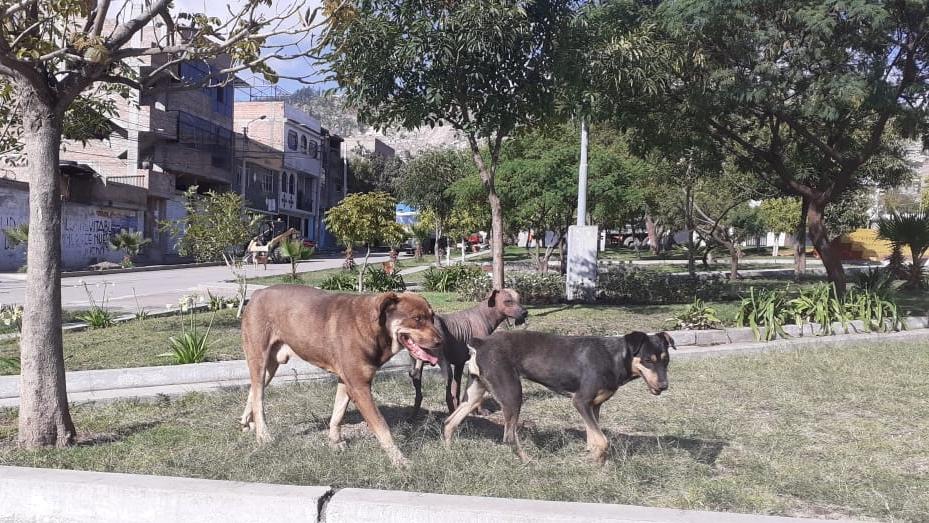 Tres perros caminando en un parque